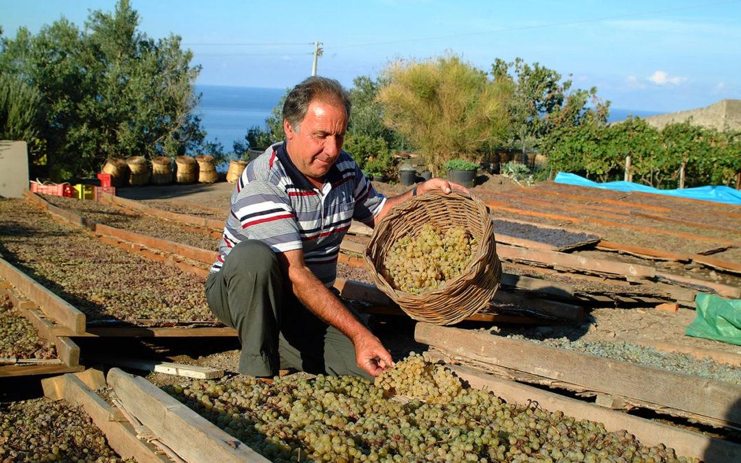 Azienda Agricola Virgona: Una storia lunga quattro generazioni